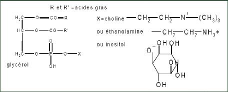huile colza formule chimique