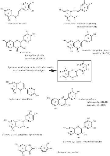 composition chimique du gingembre