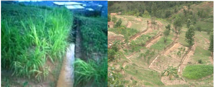 dissertation sur les paysages agraires