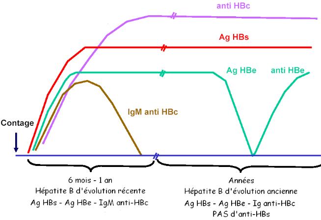 Memoire Online - Hépatite virale B: intérêt de l'utilisation des ...