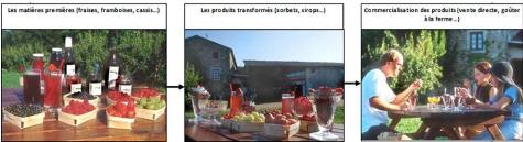 Memoire Online - L'agriruralité, entre rêves et réalités - Marie ...