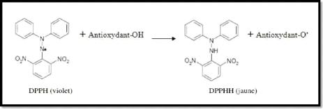 test antioxydant