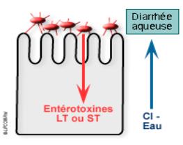 Memoire Online - Diarrhées aiguës de l'enfant en milieu hospitalier ...