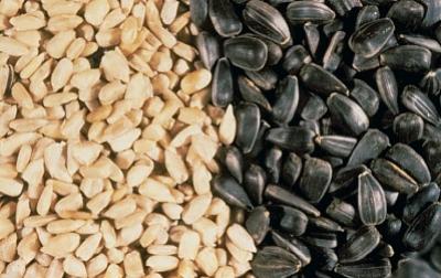 Memoire online march mondial des ol agineux med assad allah matallah - Griller des graines de tournesol ...