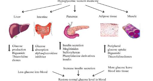 Memoire Online Evaluation Of The Hypoglycemic