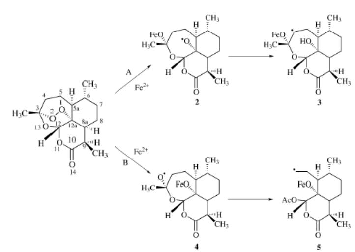 Memoire Online Interaction Of Quinolines And Artemisinin