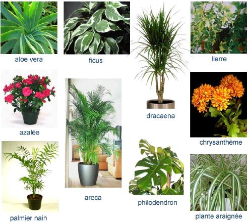 Beautiful calathea entretien with entretien areca - Ou planter un palmier dans son jardin ...