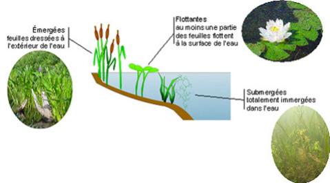memoire online prolif ration des plantes aquatiques envahissantes sur le fleuve niger tat. Black Bedroom Furniture Sets. Home Design Ideas