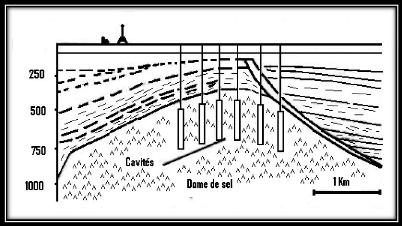 Recherche de la cavité anale 4