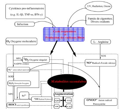origine des radicaux libres pdf