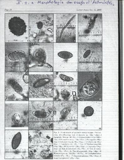 Les parasites dans les champignons de couche