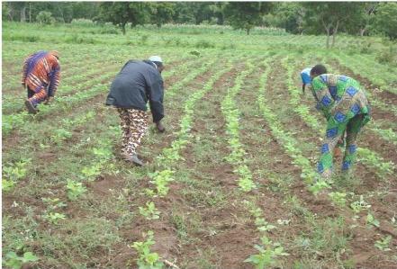 Le-leadership-des-acteurs-sociaux-au-sein-des-Organisations-Professionnelles-Agricoles-OPA--au-Be55.png